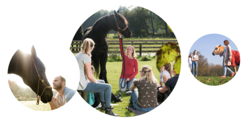 svdb-foto-paardencoaching